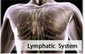 Lymhatic System