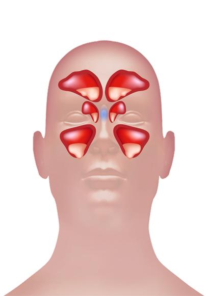 Sinus Frontalis